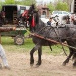 pictures-from-a-romanian-horse-market-876-433-1431530363-size_1000