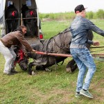 pictures-from-a-romanian-horse-market-876-776-1431530323-size_1000