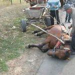 uitgeput-paard